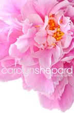 Carolyn Shepard Design Group