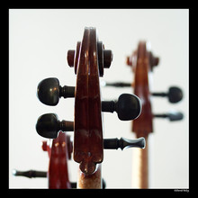 Mayfield Strings