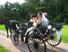 Arrivals In Elegance Horse Drawn Wedding Carriages and More